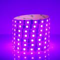 5050-60珠滴胶颜色-紫罗兰